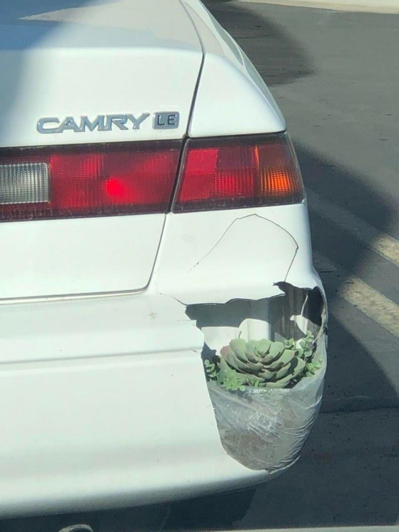 Bumperplant