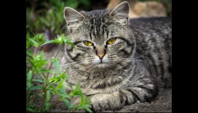 Kat en muisspel