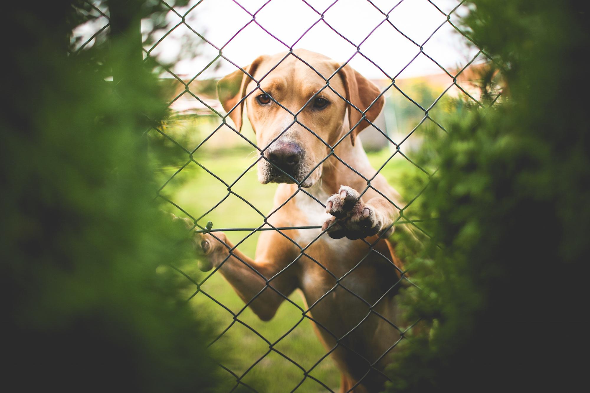Omscholing voor honden