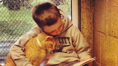 Voorlezen aan katten